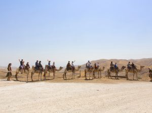 A caravan of camels walking through the rugged sandy hills of the Judean Desert on the way to Avraham's tent.